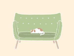 ソファで寝る猫